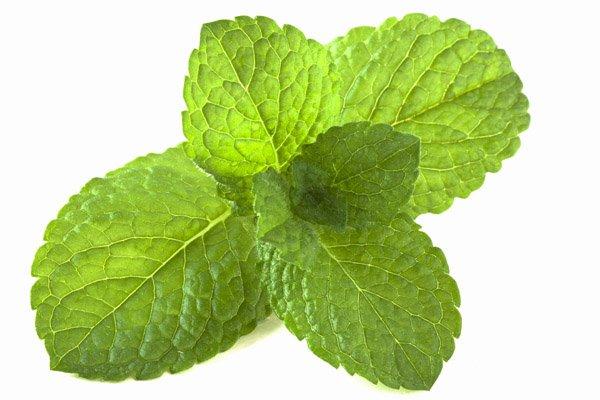 Hacer ambientador casero green net - Ambientador casero limon ...